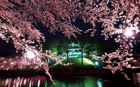 Takada Castle Cherry Blossom Viewing for 1 Million People