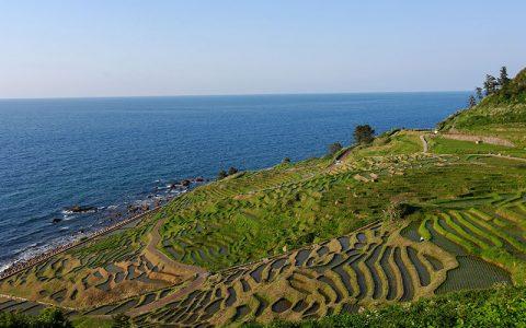 Senmaida rice fields
