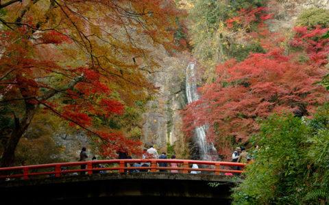 Meiji-no-mori Mino Quasi-national Park (Mino Waterfall)