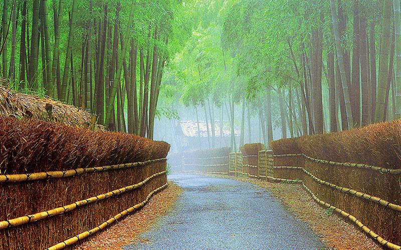 Take-no-Michi (Bamboo Path)