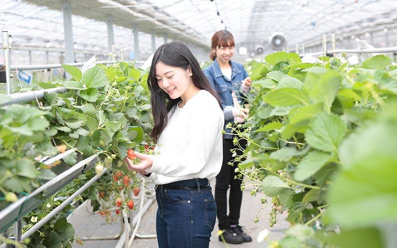 Strawberry farm youichirouen