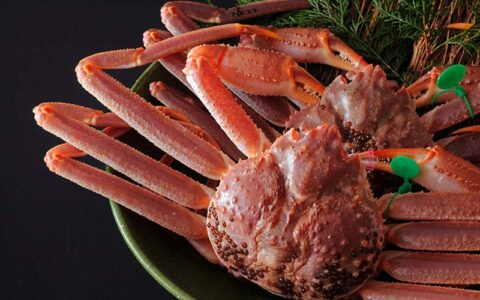 Taiza Snow Crab(Taiza-gani)—The King of The Crabs